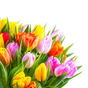 Blumen Als Hochzeitsgeschenk Alles Fur Die Verlobung Hochzeit